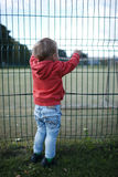 Little boy peering through a wire fence Royalty Free Stock Photography