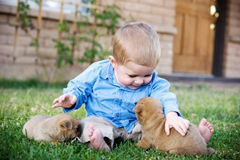 Little boy petting dog. A view of a little one-year old boy, sitting on a lawn and petting a newborn puppy Stock Photo