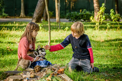 Little boy petting  husky puppy in the park Stock Photos