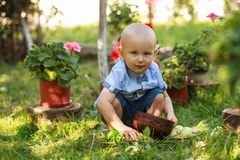 Little boy picking apple in fruit garden royalty free stock photo