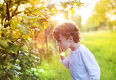 Little boy picking berries Royalty Free Stock Photos