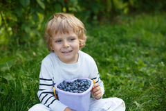 Little boy picking blueberry on organic self pick farm Royalty Free Stock Photos