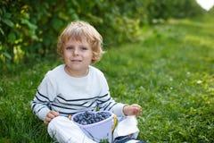 Little boy picking blueberry on organic self pick farm Stock Photos