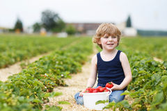 Little boy picking and eating strawberries on berry farm. Happy caucasian little boy picking and eating strawberries on berry farm in summer Stock Images