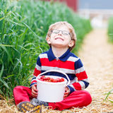 Little boy picking and eating strawberries on berry farm Royalty Free Stock Photos