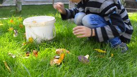 Little boy picking leaves in garden. Family kid collecting, picking leaves in garden - Stock Video. Low angle view of child collecting autumn fallen leafs on stock footage