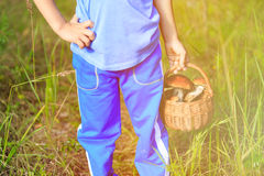 Little boy picking mushrooms in green forest Royalty Free Stock Photography