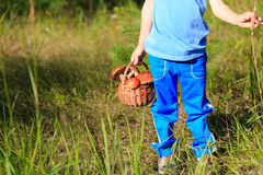 Little boy picking mushrooms in green forest Stock Images
