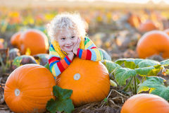 Child playing on pumpkin patch. Little boy picking pumpkins on Halloween pumpkin patch. Child playing in field of squash. Kids pick ripe vegetables on a farm in Royalty Free Stock Image