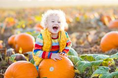 Child playing on pumpkin patch. Little boy picking pumpkins on Halloween pumpkin patch. Child playing in field of squash. Kids pick ripe vegetables on a farm in Royalty Free Stock Photos