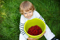 Little boy picking raspberry on organic self pick farm Royalty Free Stock Photography