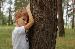 Little boy in pines forest Stock Photography