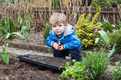 Little boy planting seeds in vegetable garden Royalty Free Stock Photo