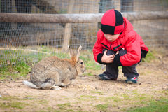 Little boy play with a rabbit Stock Photos