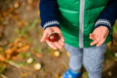Free Little Boy Play With Chestnuts In Autumn Day Royalty Free Stock Photography - 102035987