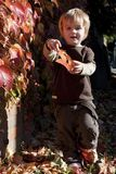 Little boy playing with autumn leaves Royalty Free Stock Images