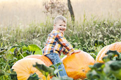Little boy playing on big pumpkins Royalty Free Stock Images