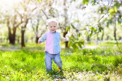 Child with cherry blossom flower. Easter egg hunt. Royalty Free Stock Image