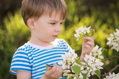 Little boy playing in blooming garden. royalty free stock photos