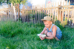 Little boy playing with a chick at the farm Royalty Free Stock Images