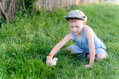 Little boy playing with a chick at the farm Stock Photos