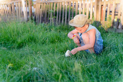 Little boy playing with a chick at the farm Royalty Free Stock Image