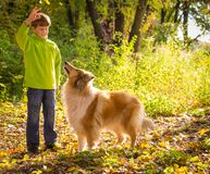 Little boy playing with collie dog on the autumn forest stock images