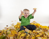 Little boy playing in colorful yellow leaves Royalty Free Stock Image