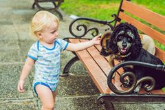 A little boy is playing with little dogs stock photos