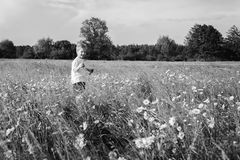 Little boy playing in the field Royalty Free Stock Photos