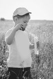 Little boy playing in the field Stock Photos