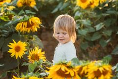 Little boy is playing in the field of sunflowers. Portrait of smiling child stock photos