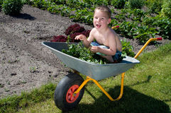 Little boy playing in the garden with wheelbarrow Royalty Free Stock Photos