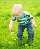 Little boy is playing on green meadow Royalty Free Stock Photo