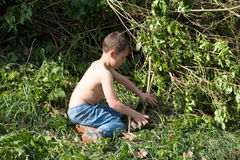Little boy playing in the hedge Stock Photography