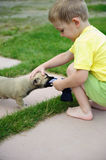 Little boy playing with his cute dog Royalty Free Stock Photo