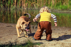 Little boy playing with his dog. At river beach Stock Images