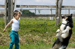 Little boy playing with his dog Royalty Free Stock Image
