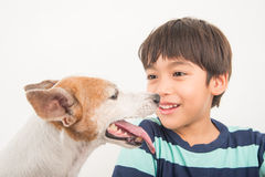 Little boy playing with his friend dog jack russel royalty free stock images