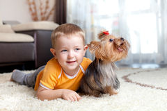 Little boy playing and hugging loving dog york Royalty Free Stock Photography