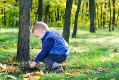 Little boy playing in lush woodland Stock Photography