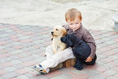 Little boy playing outdoor with a two Labrador puppies Royalty Free Stock Image