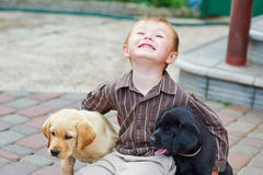 Little boy playing outdoor with a two Labrador puppies Royalty Free Stock Images