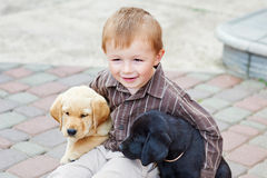 Little boy playing outdoor with a two Labrador puppies Stock Photography