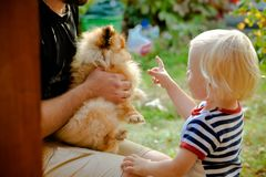 Little boy playing with the pomeranian red spitz that sitting on father's knees. Summer garden outdoor, family fun. Child with beautiful blonde hair stock image