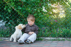 Little boy playing with a puppy labrador in the park Stock Photography