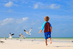 Little boy playing with seagulls on beach Stock Image