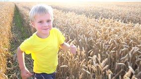 Little boy playing in wheat field stock video