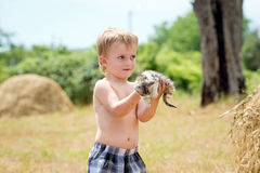 Little boy plays with a kitten Stock Photo
