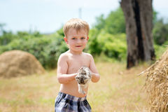 Little boy plays with a kitten Royalty Free Stock Photos